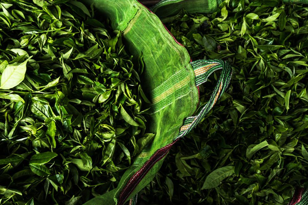 Chay-indiysky- Darjeeling-Silver-Tips-Imperial 9