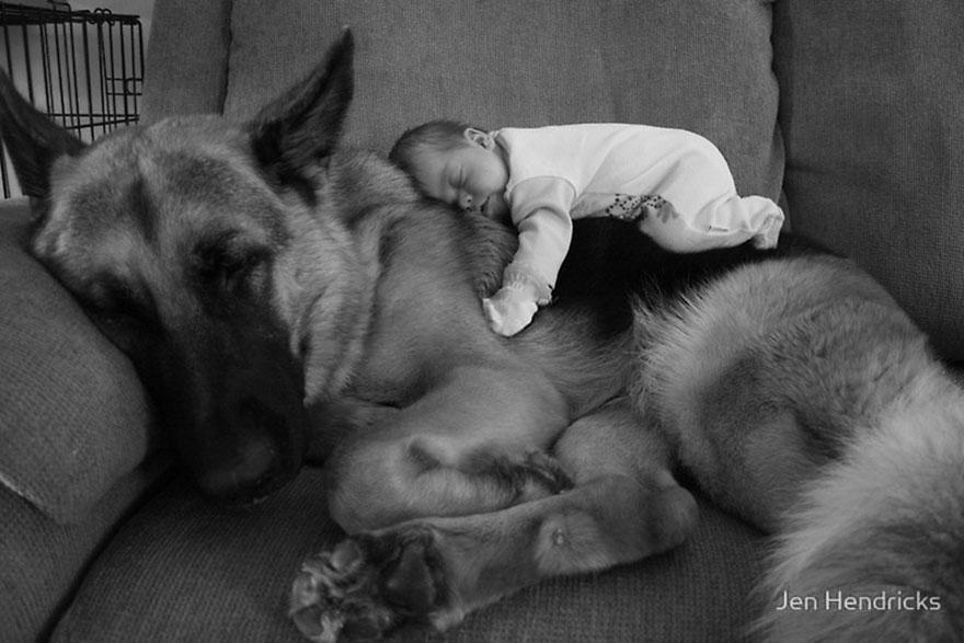 Когда собаки большие, а дети маленькие - 44 потрясающие фотографии - 1