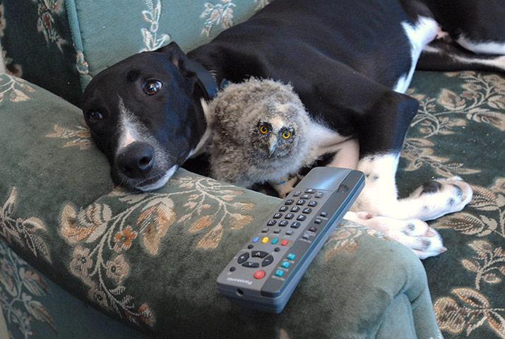 Собака Торк и сова Шрек 17