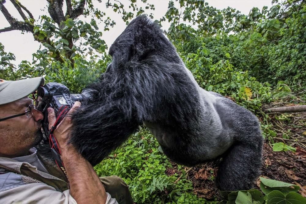 Pianaia gornaia gorilla -2