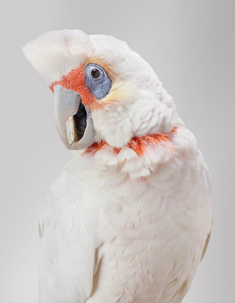Птицы - личности! Портреты Лейлы Джеффрис