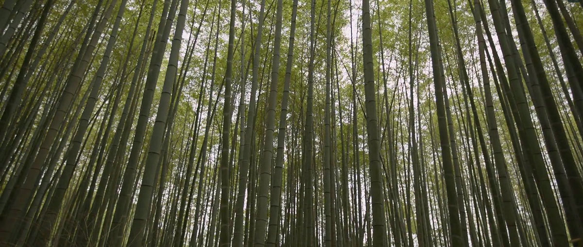 Пейзажи и культура Японии