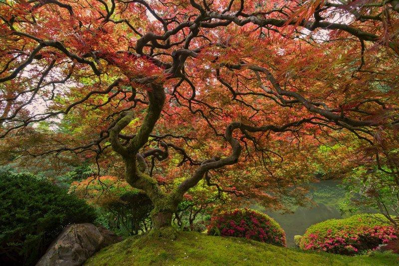 Четыре очень древних вида животных, которые старше деревьев