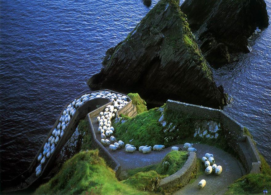 Колоритные пейзажи с овцами - 25 фото-1