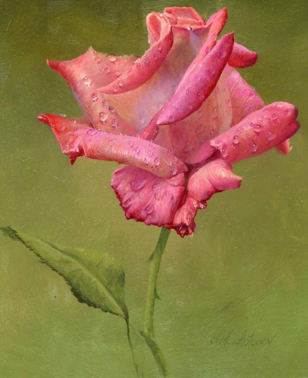 28-dew-on-Rose-Paintings-by-Alexei-Antonov