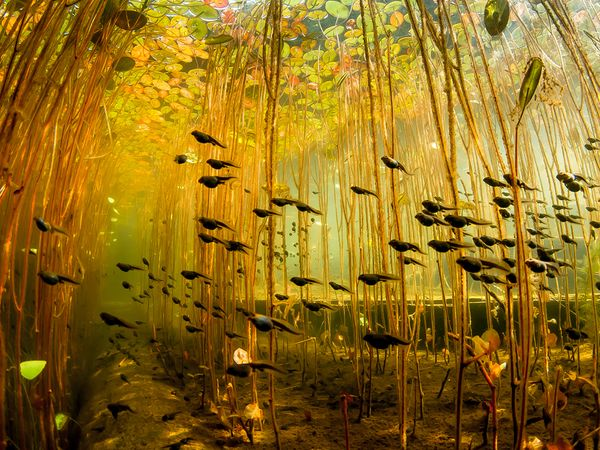 33-Tadpoles-swamp-canada-by-Eiko-Jones