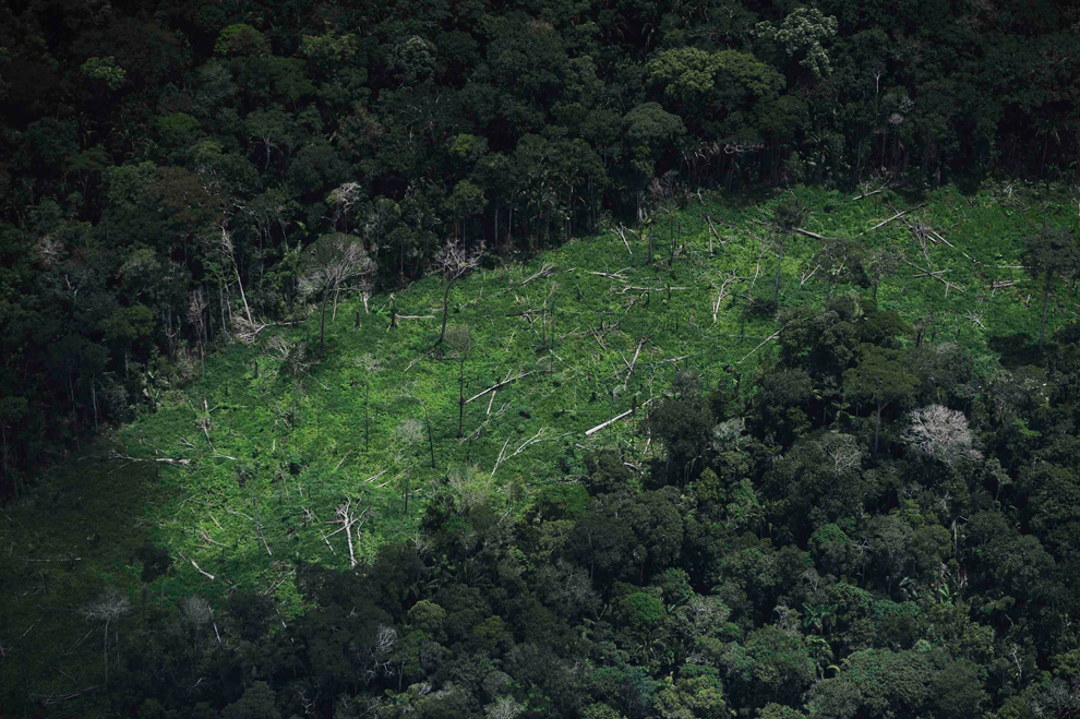 Amazonka 23