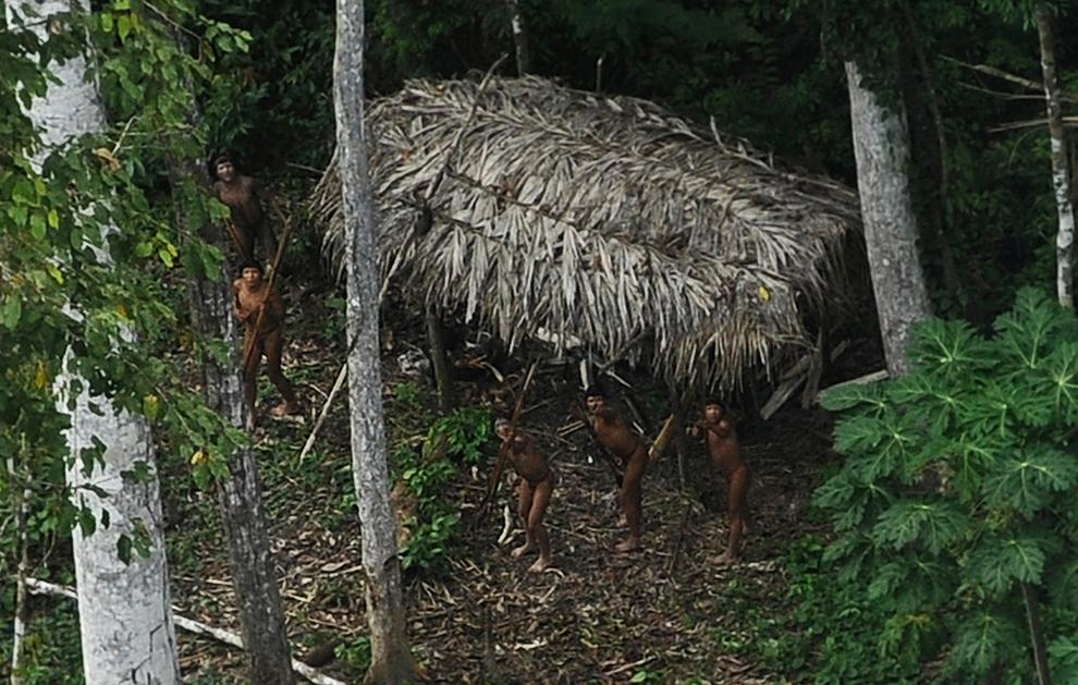 Amazonka 25