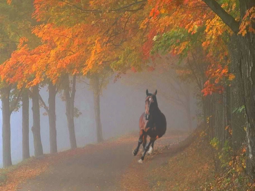 Spooked-horse-galloping-through-foggy-fall-forest