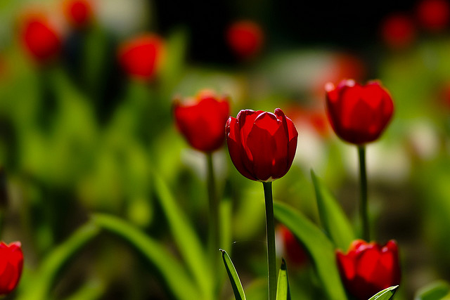 60-beautiful-flower-pictures-1