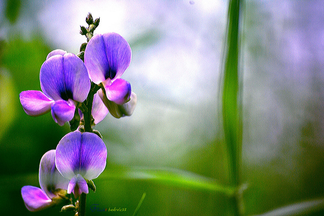 60-beautiful-flower-pictures-5