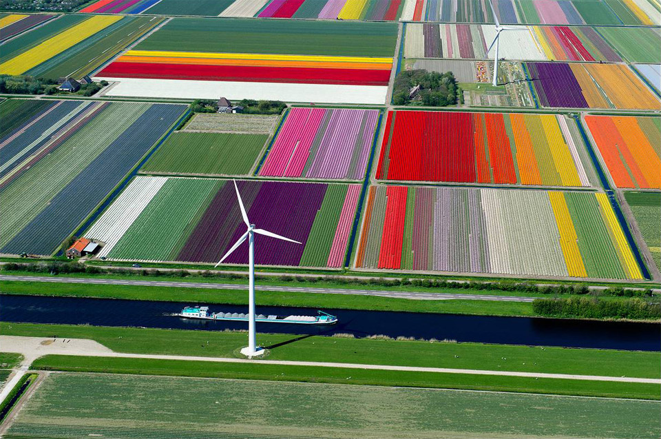 tulip-fields-wind-turbines-and-canal-holland