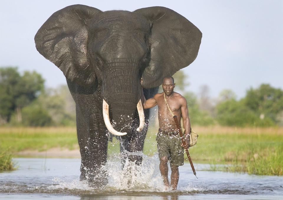mahout-with-african-elephant