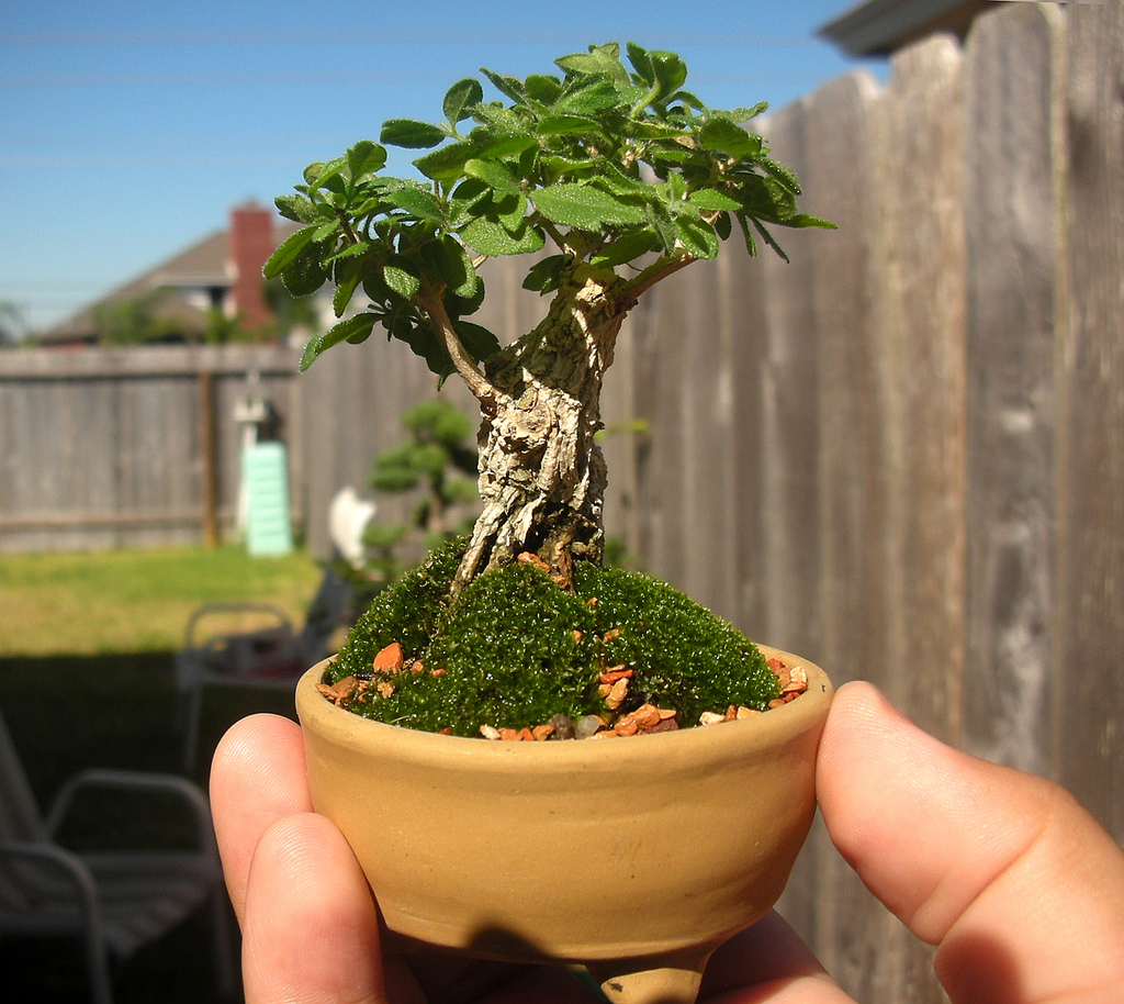 Все растения которые выращивают в домашних условиях