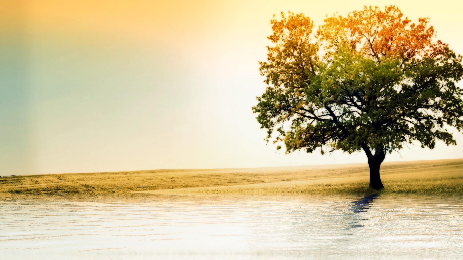 большое дерево  № 1647799 загрузить