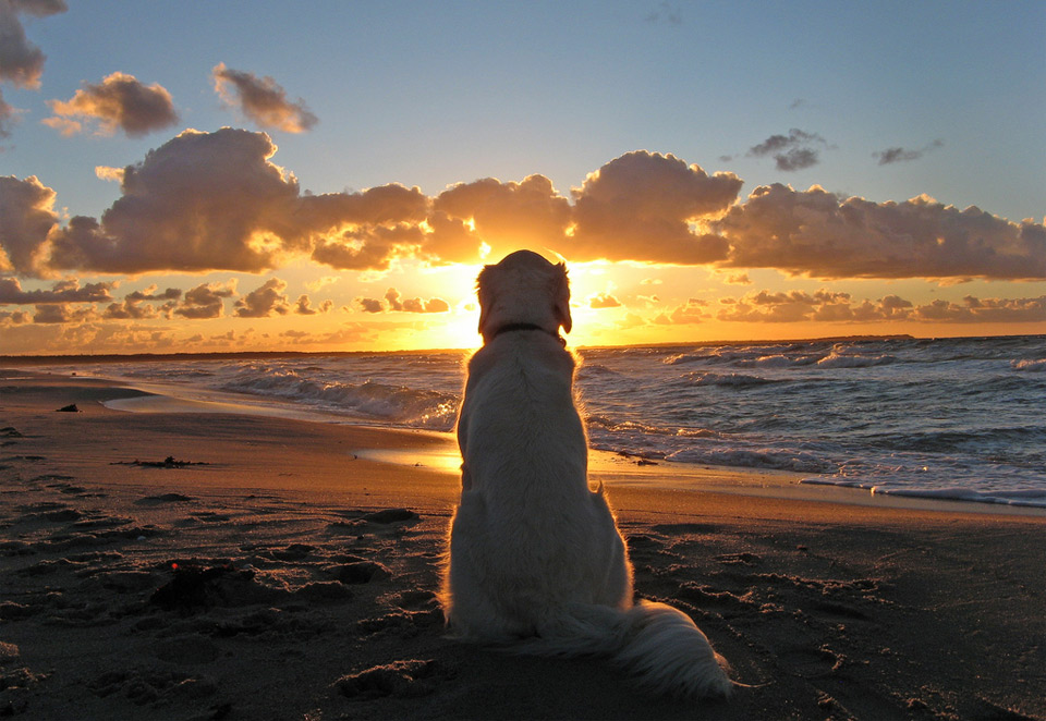 12dog-enjoys-a-beautiful-sunset