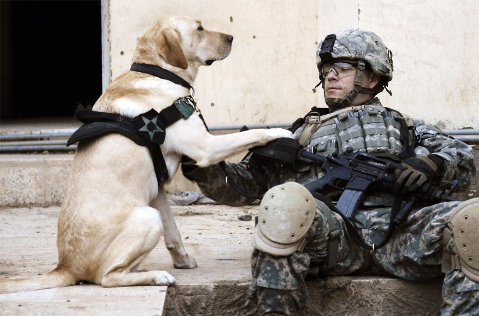 4a-soldier-and-his-dog-in-iraq