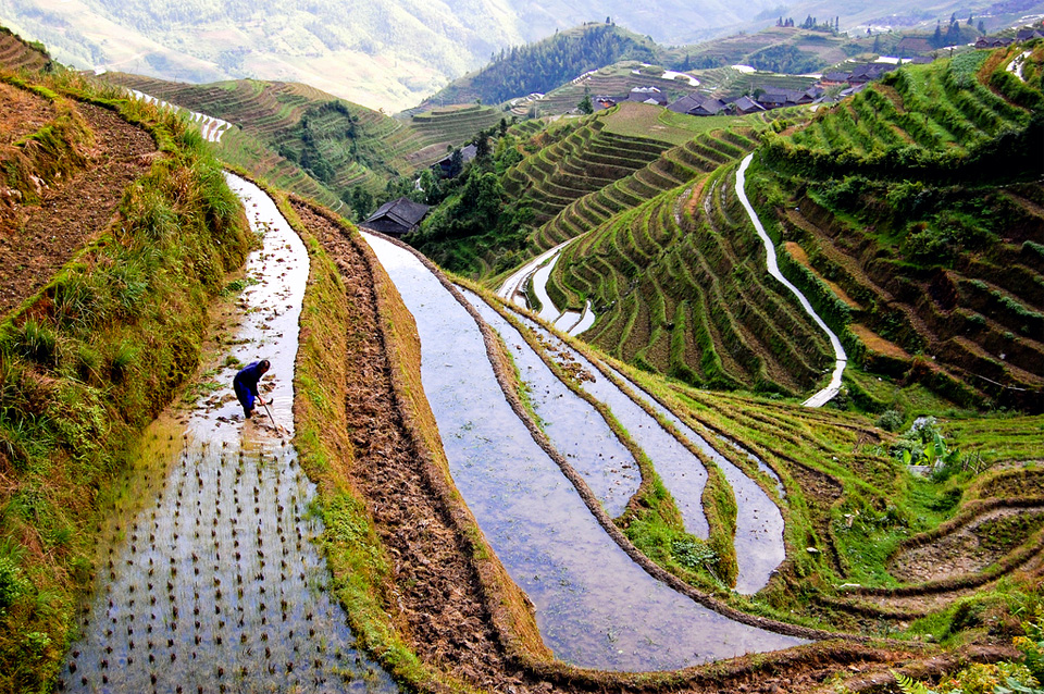7rice-worker-china