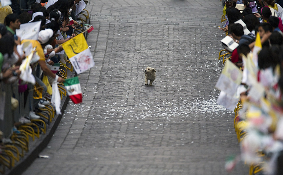 8dog-runs-through-a-parade