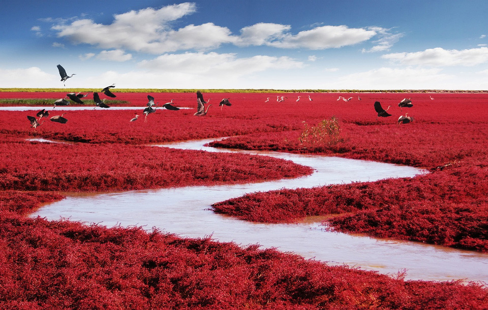 9red-beach-panjin-china
