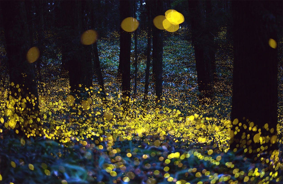 9fireflies-on-long-exposure