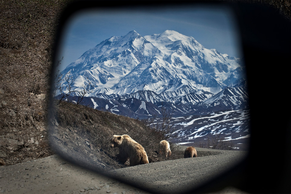 69bears-in-my-side-view-mirror