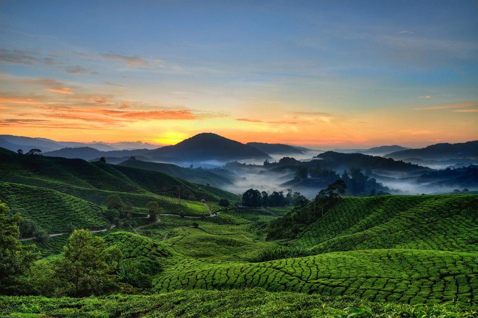 91cameron-highlands-malaysia