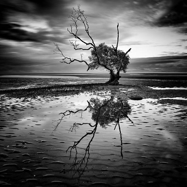 фото черно-белые природа