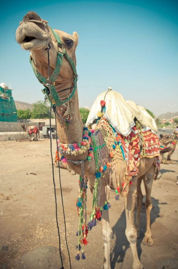 india_photography_32