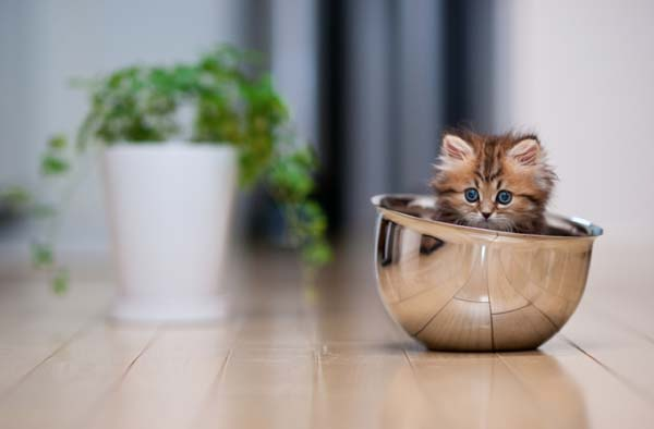 Impressive and Cute Examples of Cat Photography