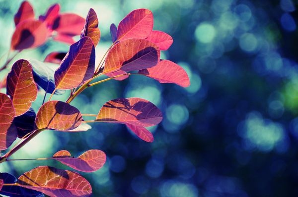 autumn_wallpapers_22