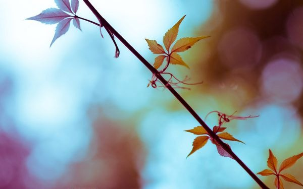autumn_wallpapers_11
