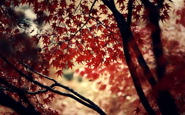 autumn_wallpapers_23
