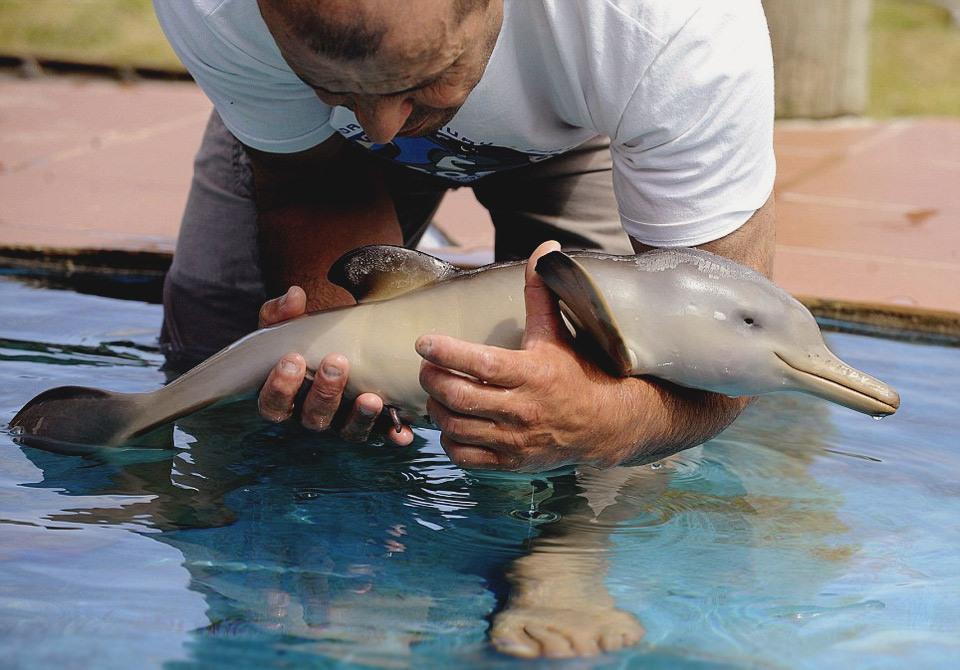 day-old-orphan-dolphin