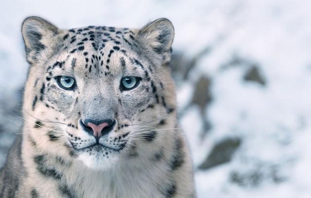 Фотограф 2 года фотографировал животных, которые вскоре могут исчезнуть