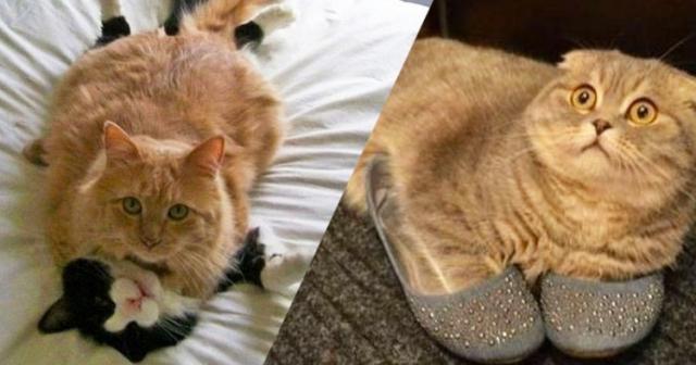 Этот неловкий момент из жизни кошек - смешные фото