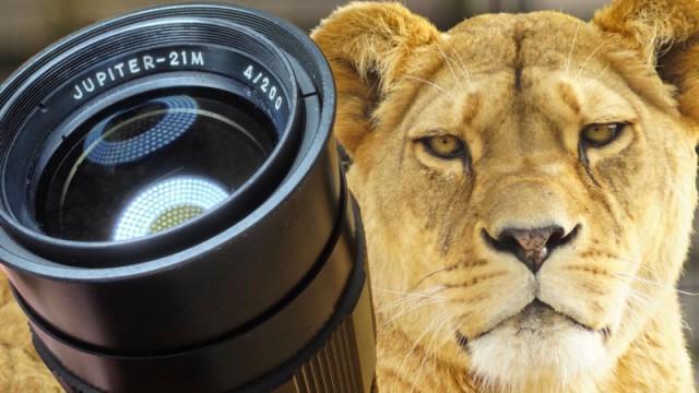 Юпитер 21М 200 мм F/4 – отличный объектив всего за 30 долларов для фотографов с крепкими руками