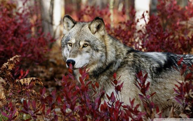Очаровательные животные и восхитительная осень - 30 фотографий