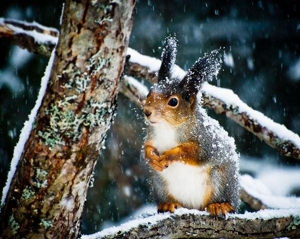 35 Прекрасных зимних фотографий