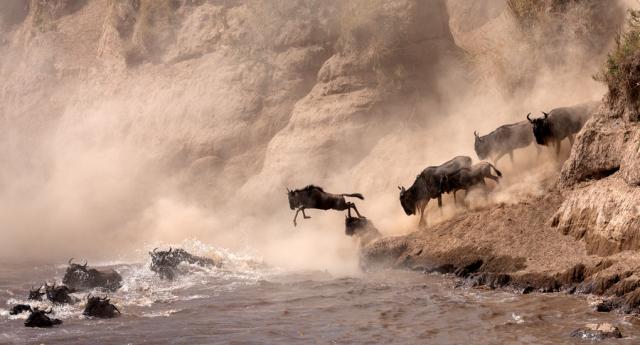 Фотографии самых драматических миграций животных
