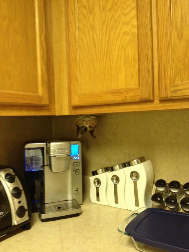 Кошки, которые прячутся как ниндзя - 25 фото. Или руководство, где искать кота в доме