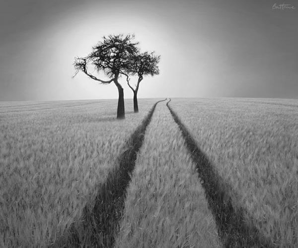 Фотографии природы – практические советы по черно-белой фотографии
