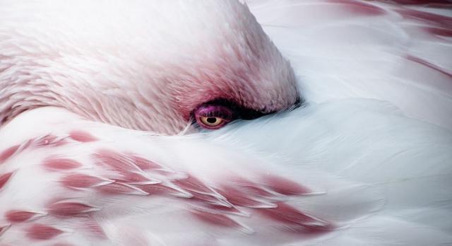 Меланхоличный фламинго