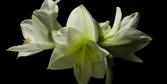 «Весна»: цветочный таймлапс, на съёмку которого ушло три года