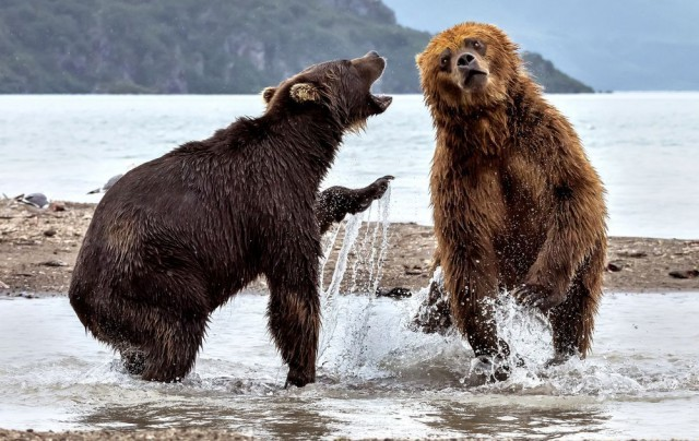 Случай на медвежьей рыбалке