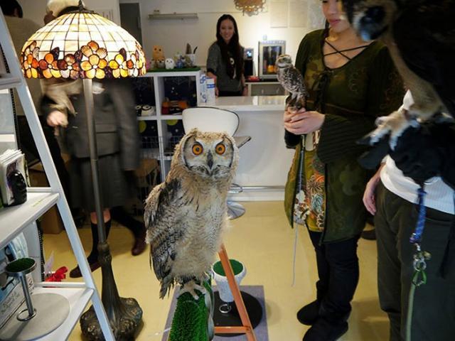 В Лондоне ждут открытия бара с совами