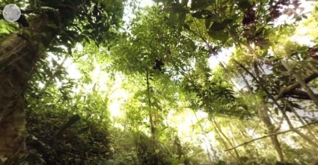 Погрузитесь в дикие джунгли с панорамным видео в 360 градусов