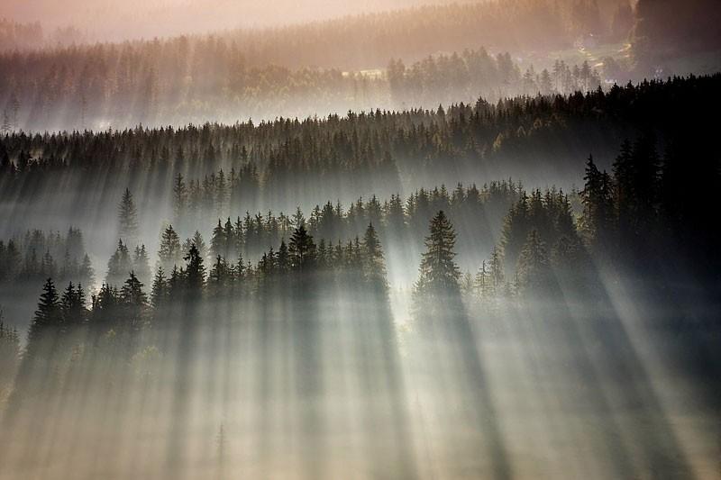 Первые лучи солнца и туманный лес в пейзажах Богуслава Стремпеля