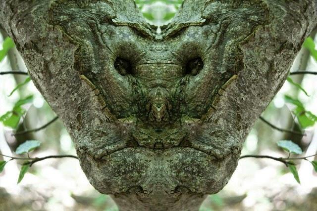 Лесные образы в фотографиях Элидо Турко