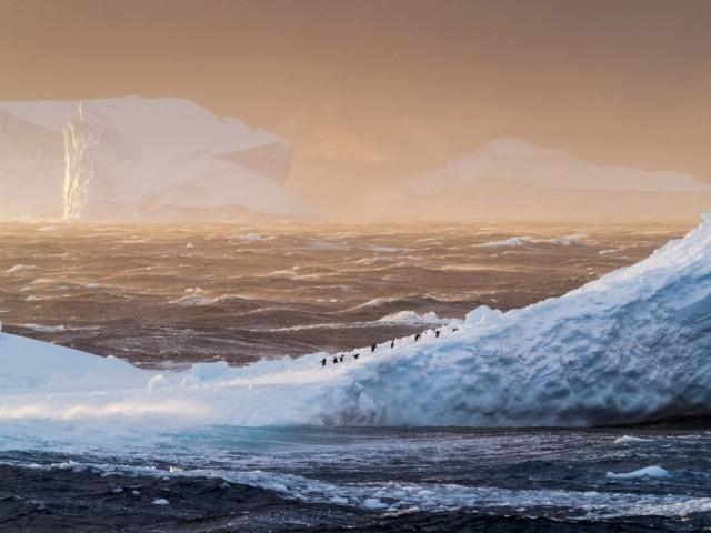 У берегов Антарктиды